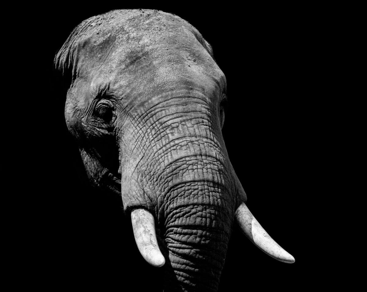 Die Elefantenhirn-App